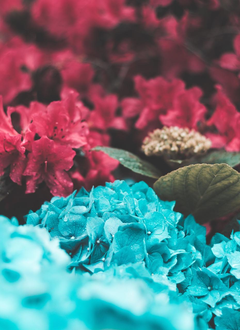 картинки в розово-синем цвете сразу уточним, будем