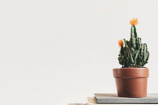 Cactus, Green, Plant, Flowerpot