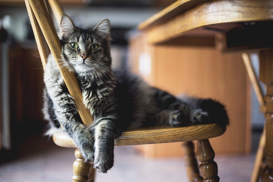 En Bois, Table, Chaise, Un Meuble, À Manger, Surface