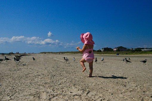 10+ Free Baby Seagull & Seagull Photos - Pixabay
