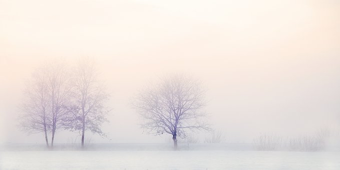 Winter Landscape, Trees, Snow, Nature