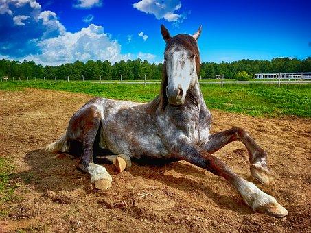 Horse Countryside Farm Animal Nature