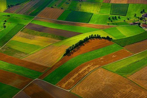 Field, Farm, Green, Grass, Agriculture