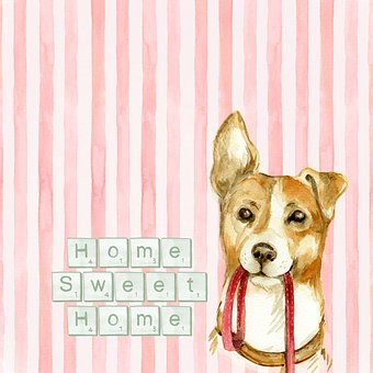Home, Home Sweet Home, Sentiment, Dog
