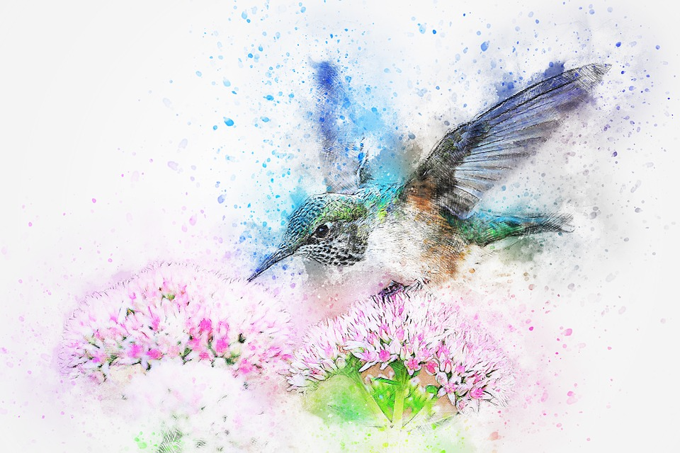 Bird, Animal, Flowers, Art, Abstract, Watercolor