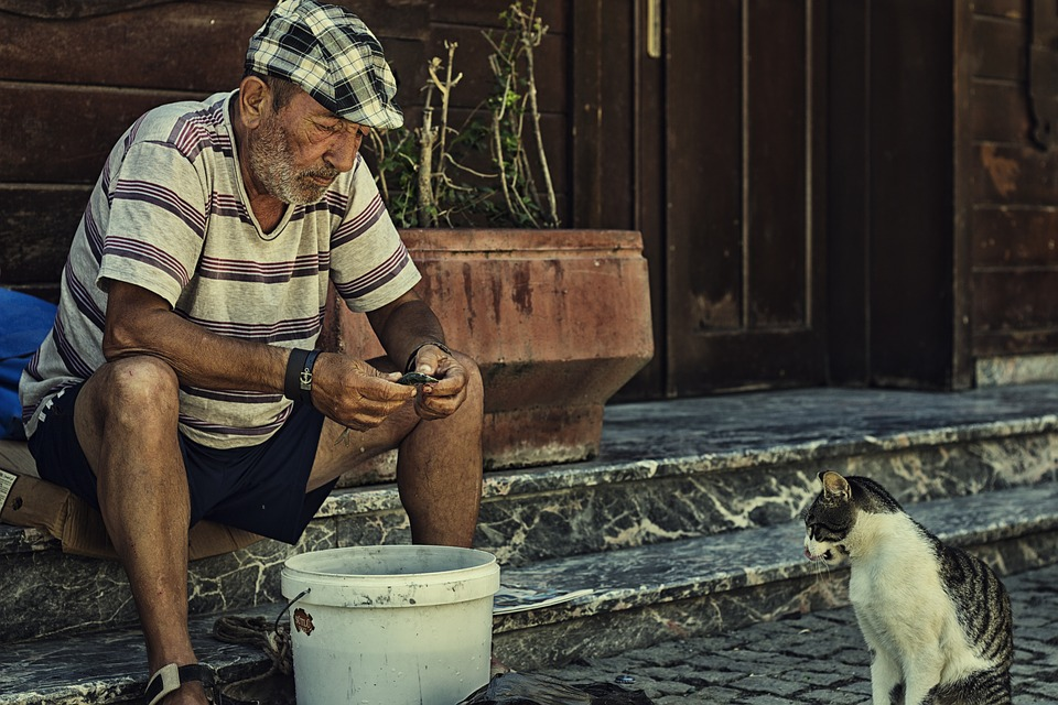 Everyone in Turkey is taking care of the cats. Source: Pixabay