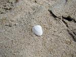 muszelka, plaża, piasek