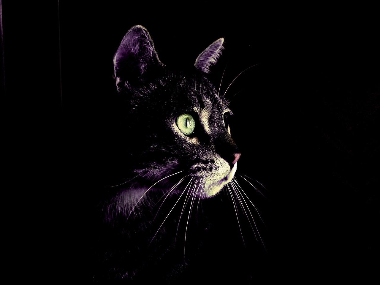 Кошка в темноте картинка