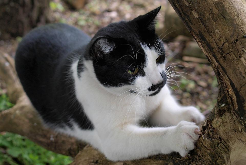 Kat Dierlijke - Gratis foto op Pixabay
