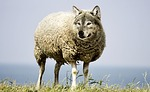 wolf in sheep's clothing, wolf, sheep