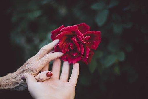 Fleur, Red, Pétale, Bloom, Jardin