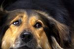 dog, nose, close