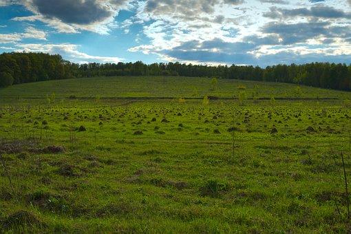 Field, Hill, Mole, Grass, Forest, Uneven