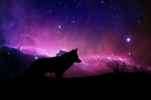 Wolf, Magische, Raum, Design, Fantasie