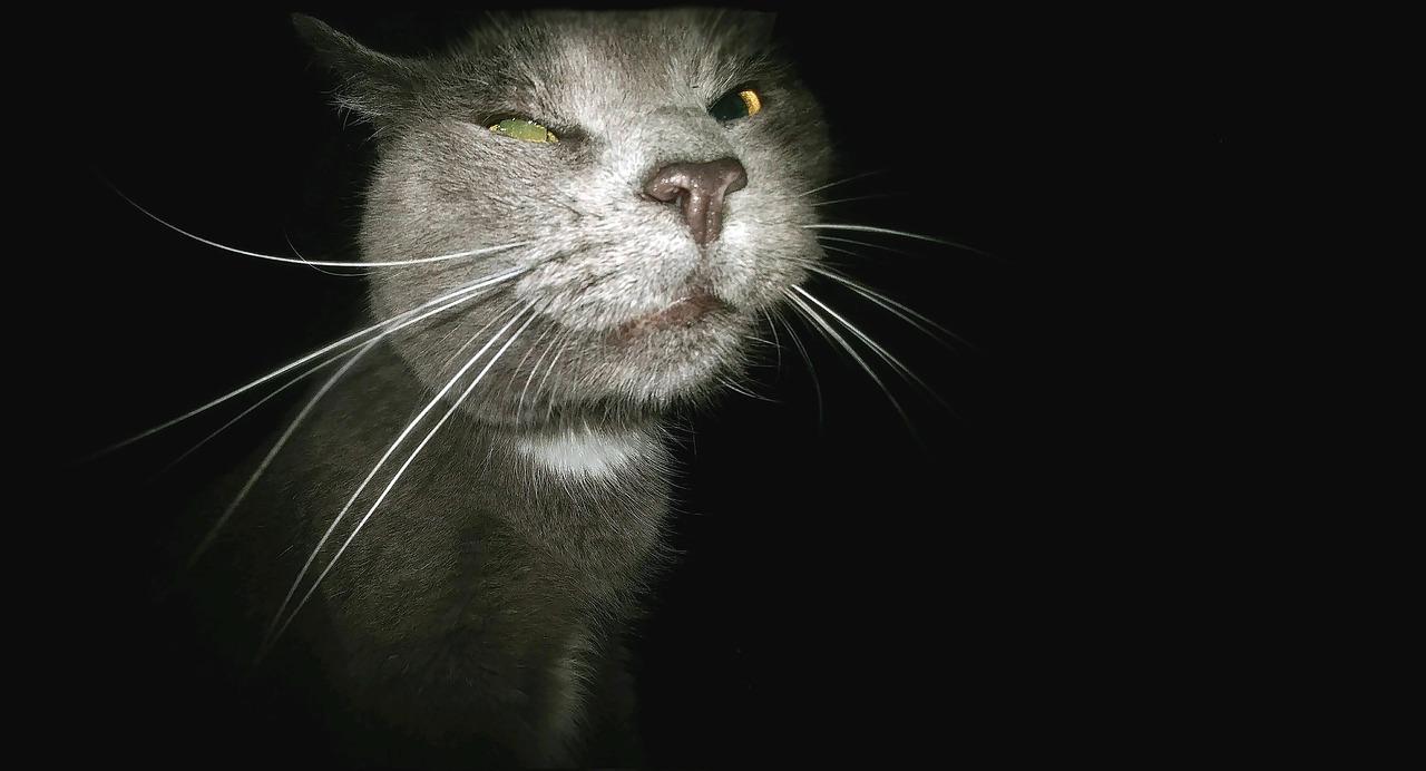 猫, おかしい, ストーカー, ツル, 間抜けな顔, 動物, かわいい, ペット, ネコ, ハローキティ