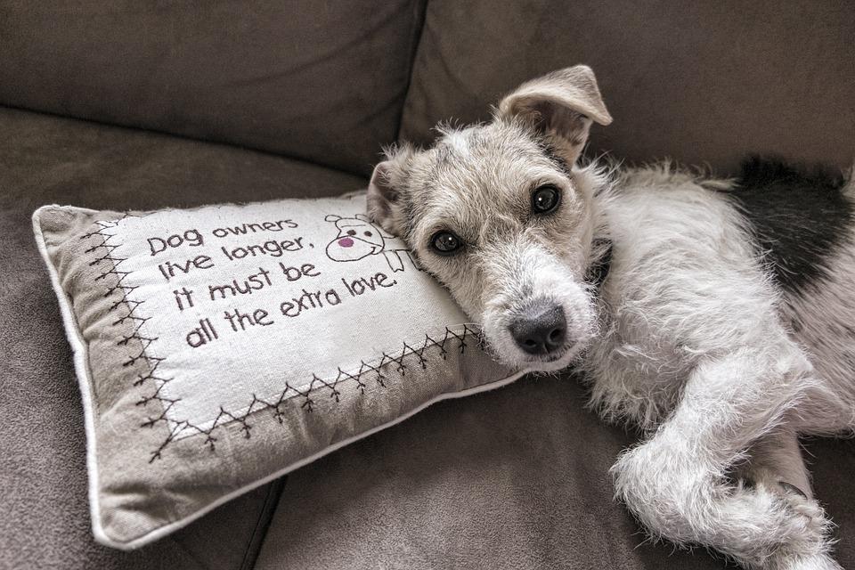 gratis billede hund l se sofa dyr hunde gratis billede p pixabay 2579877. Black Bedroom Furniture Sets. Home Design Ideas