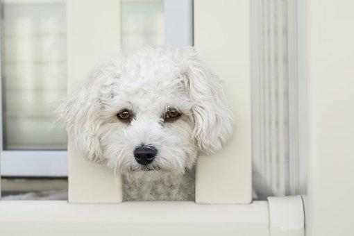 Dog, Sad, Face, Sad Dog, Pet