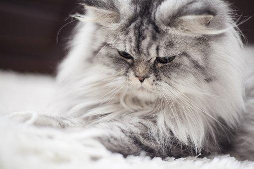Cat, Animal, Animal Portrait, Kitty