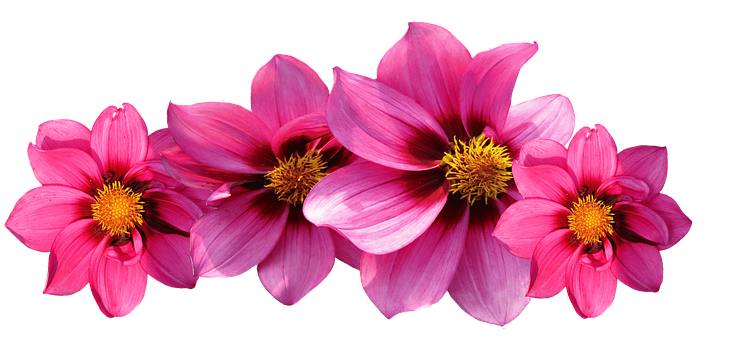 Autumn flowers images pixabay download free pictures dahlias flowers dahlia garden mightylinksfo