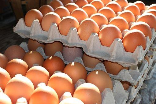 Fresh Eggs, Home Grown Eggs, Agriculture
