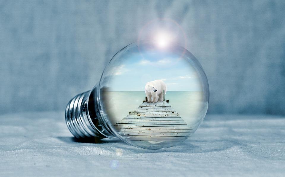 Lampadina, Polar Bear, Web, Mare, Luce, Energia
