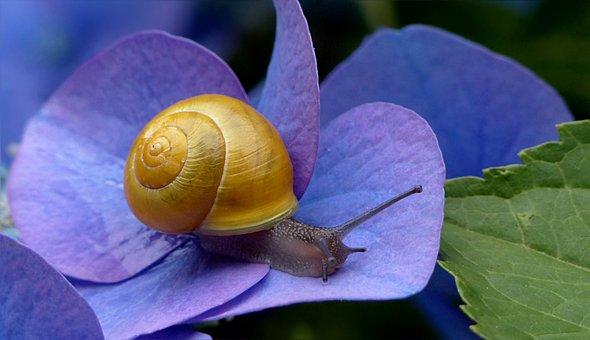 Des Animaux, Mollusque, Reptile