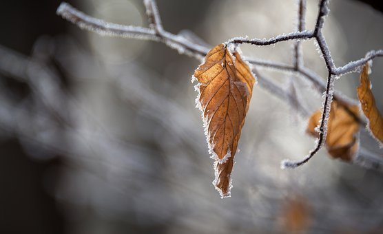 Snow, Autumn, Leaves, Winter, Leaf