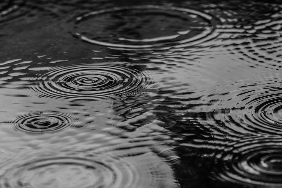 Puddle, Water, Rain, Nature, Gray Nature, Gray Water