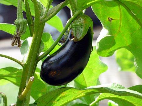 野菜, ナス, 食品, 家庭菜園, バイオ, 自然, キッチン