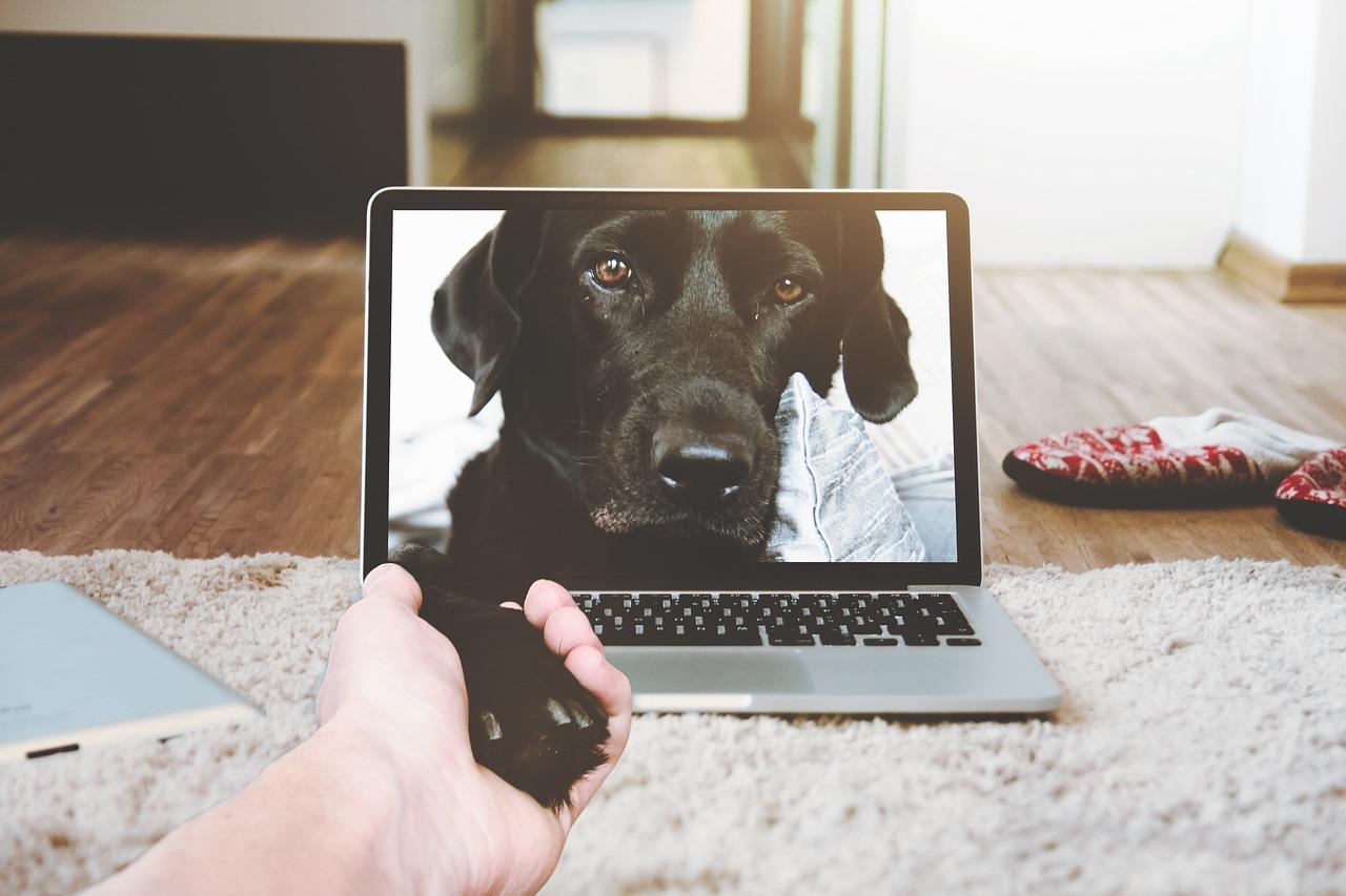 hunde online chat