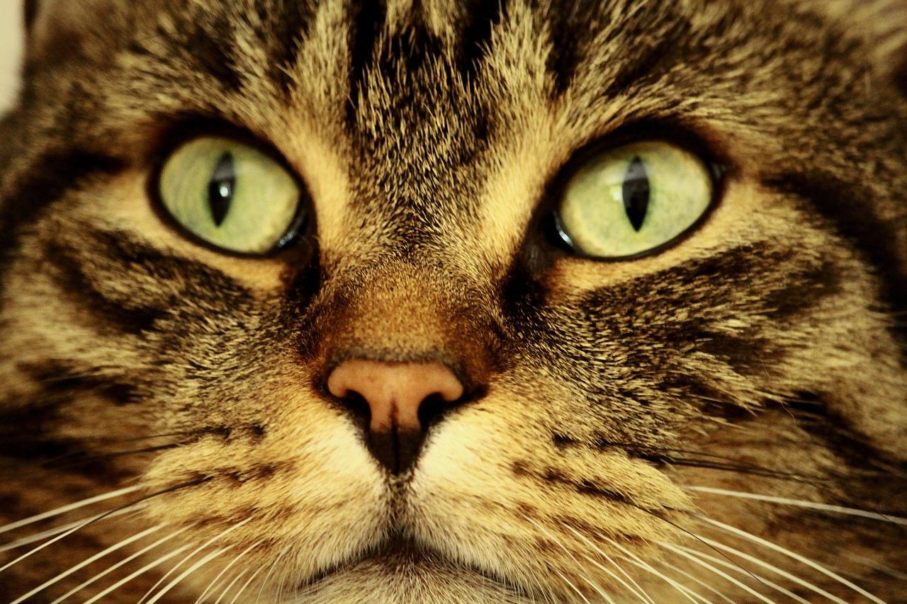 коронарный картинка про кота с глазами многих