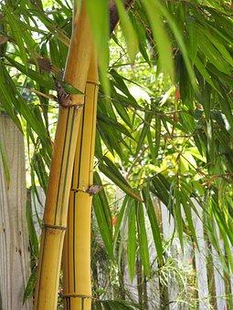 Pohon Pohon Bambu Gambar Unduh Gambar Gambar Gratis Pixabay