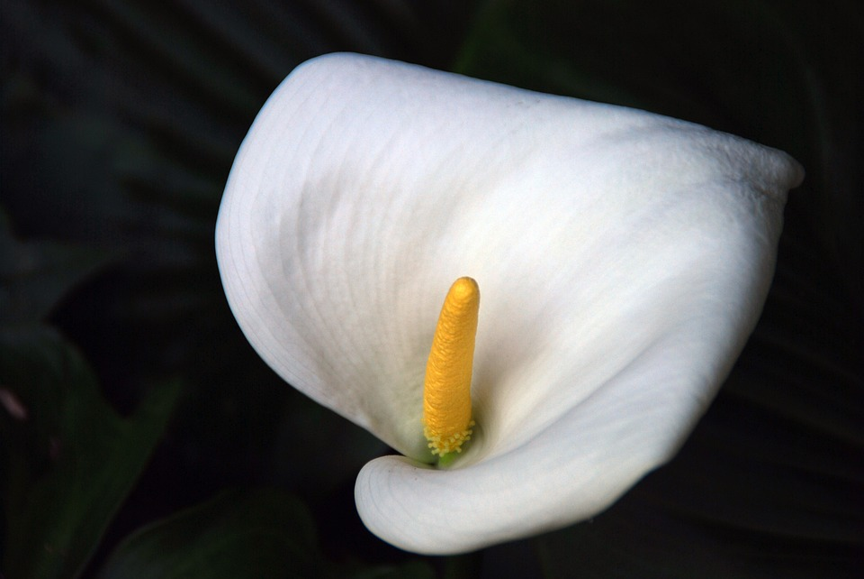 Flower white free photo on pixabay flower white white flower floral nature plant mightylinksfo Gallery