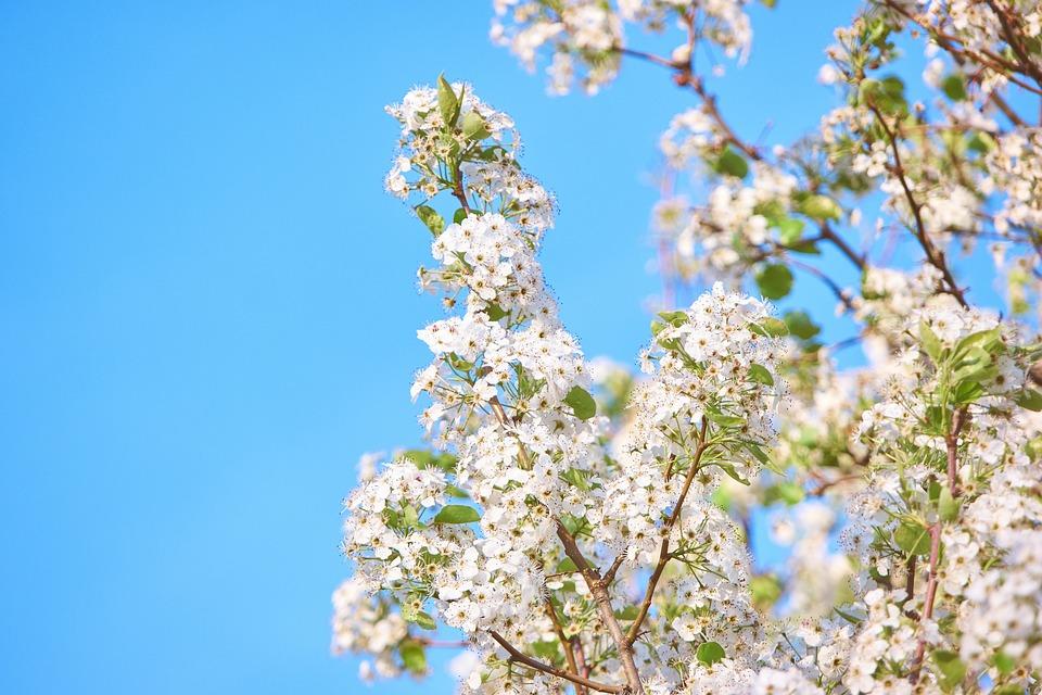 Bunga Mekar Putih Foto Gratis Di Pixabay