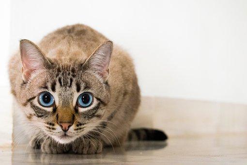 Cat, Animal, Kitten, Cute, Floor, Eyes
