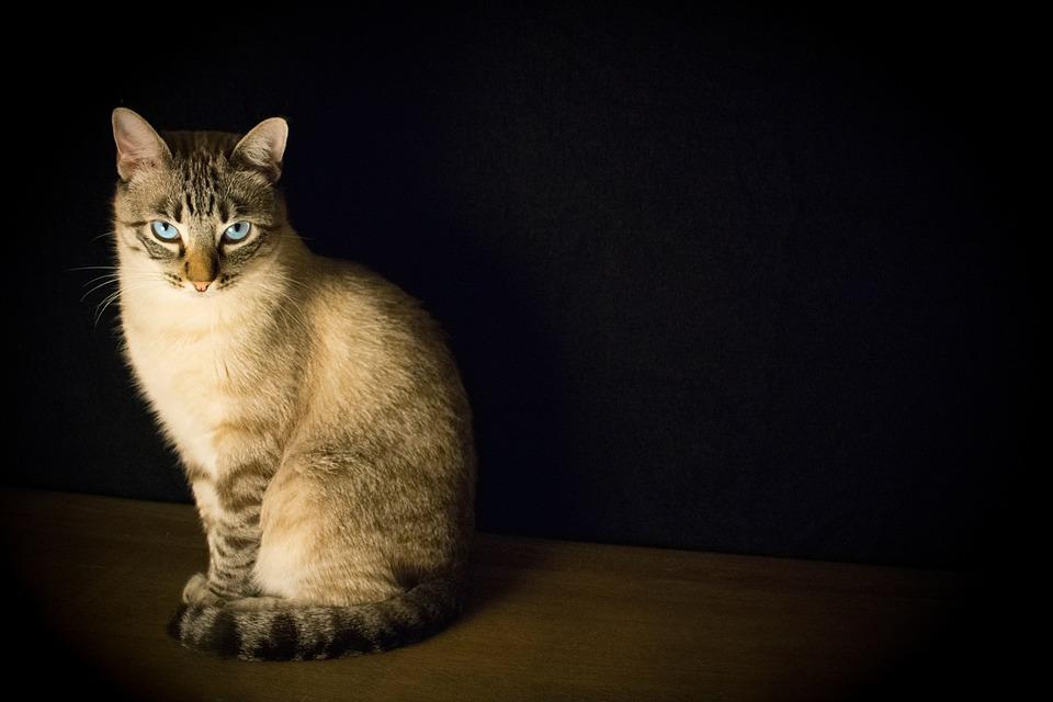 Cat, Animal, Kitten, Floor, Dark, Black Cat