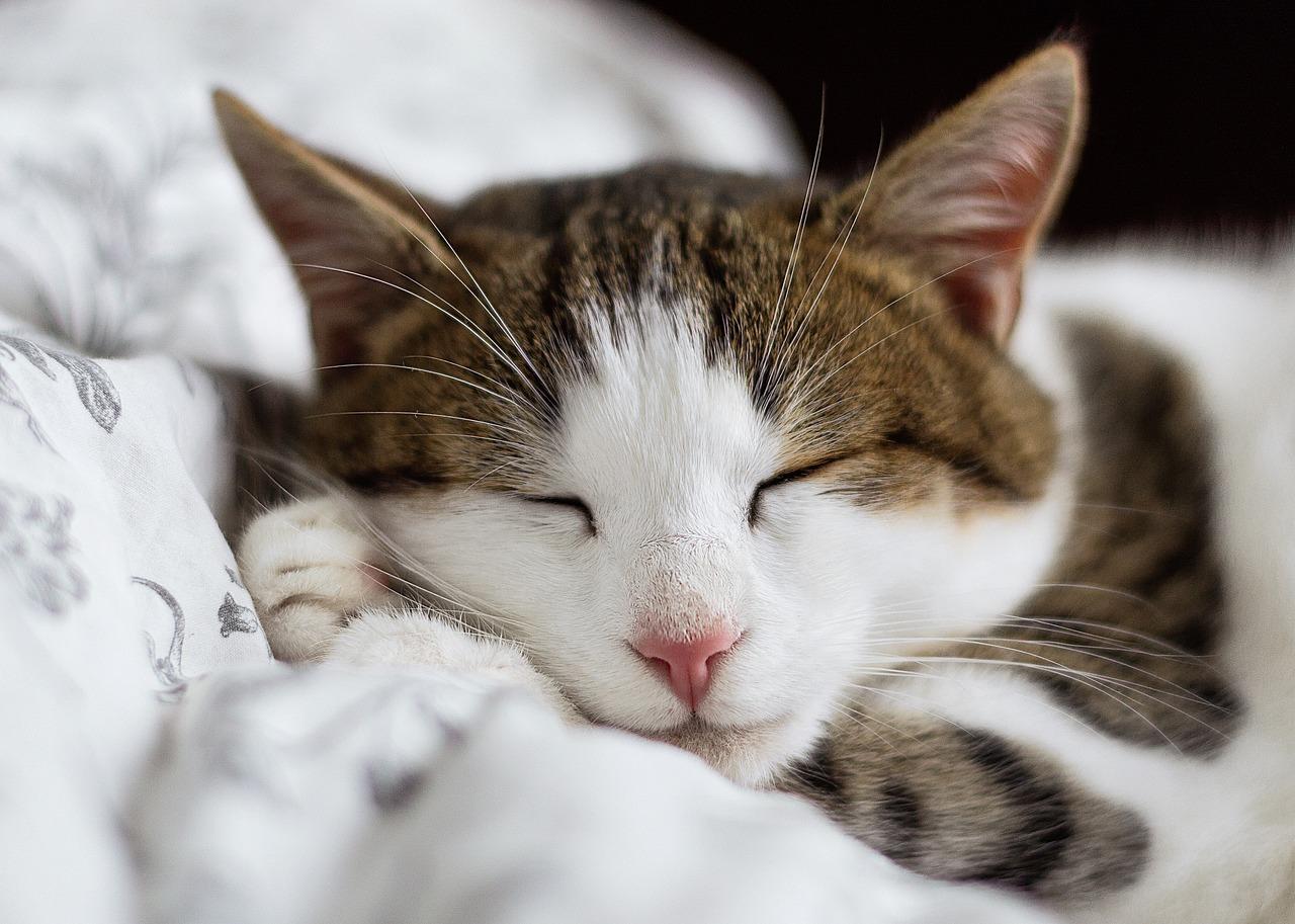 аренде коттеджей картинки котов во сне белая акула