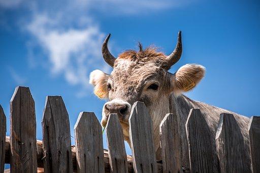 ЕС сокращает использование антибиотиков в животноводстве