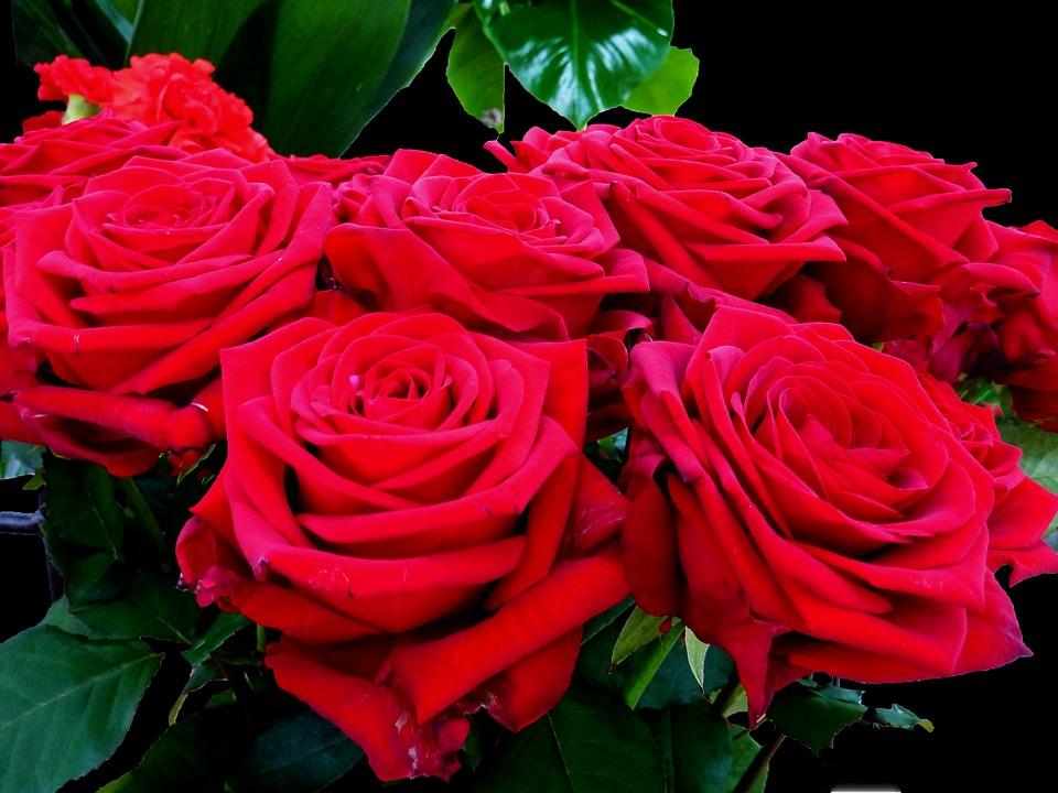 Rosas Rojo Rosa Roja Foto Gratis En Pixabay