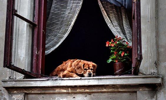 ウィンドウ, Windows, 古い家, 犬, 色とりどりのおうち