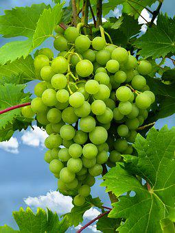 Eat, Grapes, Fruit, Healthy, Food, Green