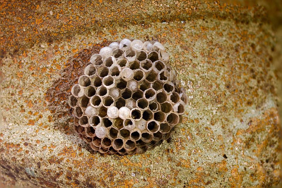 nid d 39 abeille gu pes peignes la photo gratuite sur pixabay. Black Bedroom Furniture Sets. Home Design Ideas