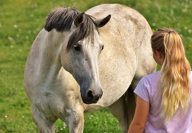 Girl Love For Animals Horse  Free Photo On Pixabay-5835