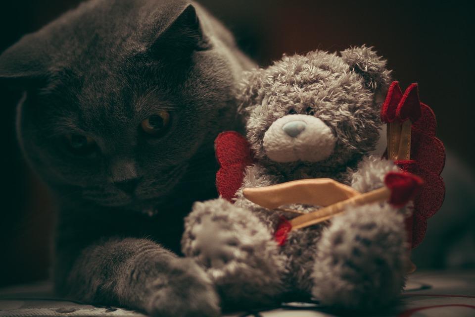 černá kočička hračka