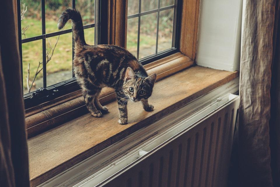 Janela, Vidro, Frame, Gato, Animal De Estimação, Animal