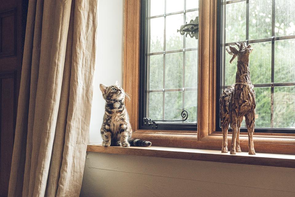 Innenfenster  Kostenloses Foto: Haus, Innen, Fenster, Glas, Rahmen - Kostenloses ...