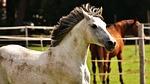 horse, mold, pony