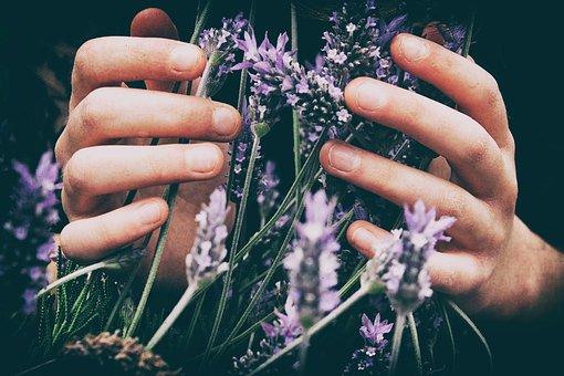 Lavender, Flower, Petal, Bloom, Blossom
