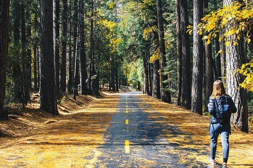 Road, Tree, Plant, Forest, Nature, Leaf
