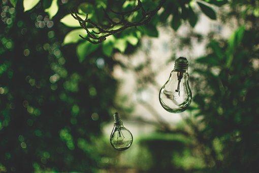 Žárovka, Přírody, Strom, Zelená